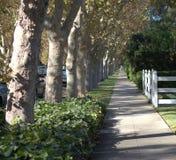 Vicolo degli alberi di acero Fotografia Stock