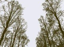 Vicolo degli alberi nel parco di autunno Fotografie Stock