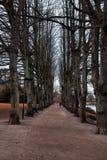 Vicolo degli alberi nudi che crescono lungo la strada immagine stock