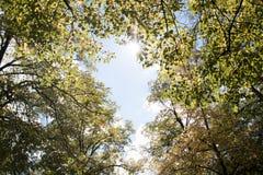 Vicolo degli alberi in un parco in Spagna con il cielo Fotografia Stock