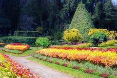 Vicolo dei fiori variopinti, dei cespugli ornamentali e degli alberi Immagini Stock