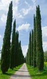 Vicolo del Cypress Fotografie Stock