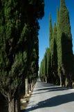 Vicolo del Cypress, Montepulciano, Italia fotografie stock libere da diritti