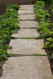 Vicolo del giardino Fotografia Stock