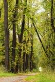 Vicolo del linden di autunno Fotografia Stock Libera da Diritti