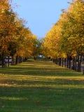 Vicolo del linden di autunno Fotografie Stock