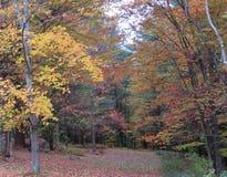 Vicolo del paese del Vermont in autunno Fotografia Stock Libera da Diritti