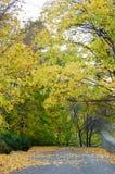 Vicolo del parco di autunno Fotografia Stock