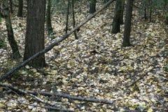 Vicolo del parco di autunno di paesaggio di autunno con gli alberi nudi e le foglie variopinte cadute asciutte fotografie stock libere da diritti
