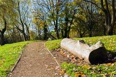 Vicolo del parco in parco Fotografia Stock