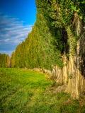 Vicolo del pioppo di estate Fotografie Stock