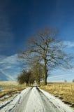 Vicolo dell'albero Immagini Stock Libere da Diritti