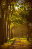 Vicolo dell'albero Immagini Stock