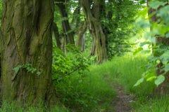 Vicolo dell'albero alla molla Fotografia Stock Libera da Diritti