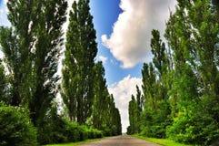 Vicolo dell'albero di pioppo Fotografia Stock