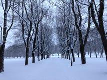 Vicolo dell'albero nell'inverno fotografie stock