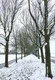 Vicolo dell'albero nella neve Immagini Stock