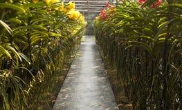 Vicolo dell'orchidea Fotografie Stock Libere da Diritti