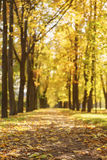 Vicolo della città di autunno con gli alberi dorati di caduta e le foglie cadute Immagine Stock Libera da Diritti