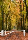 Vicolo della foresta fotografie stock