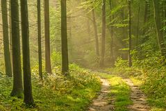Vicolo della foresta Immagini Stock