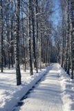 Vicolo della neve in un parco di inverno   Fotografia Stock Libera da Diritti
