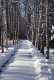 Vicolo della neve in un parco XXXL di inverno Fotografie Stock Libere da Diritti