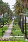 Vicolo della palma Immagini Stock
