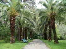 Vicolo della palma Fotografia Stock