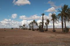 Vicolo della palma, Marocco Immagine Stock