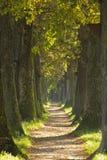 Vicolo della quercia Immagine Stock