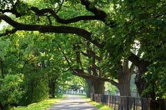 Vicolo della quercia Immagini Stock