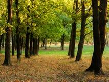 Vicolo della quercia della foresta della quercia di autunno Autumn Landscape Immagine Stock Libera da Diritti