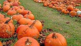 Vicolo della zucca - una delizia di Halloween fotografie stock