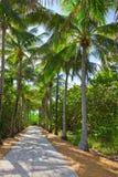 Vicolo delle palme, Key Biscayne Immagini Stock
