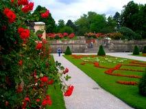 Vicolo delle rose Fotografia Stock
