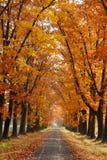 Vicolo di autunno Immagini Stock