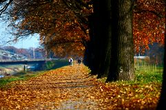Vicolo di autunno Fotografia Stock