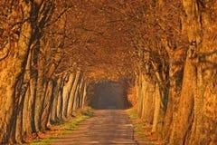 Vicolo di autunno Immagine Stock Libera da Diritti
