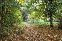 Vicolo di autunno al giardino botanico Fotografia Stock