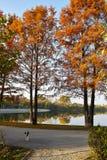 Vicolo di autunno nel parco con il cane randagio Immagini Stock Libere da Diritti