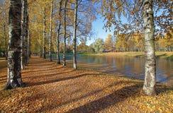 Vicolo di autunno a Pavlovsk, regione suburbana di Pietroburgo Fotografia Stock