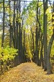 Vicolo di autunno in sosta Immagini Stock