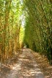 Vicolo di bambù Immagine Stock Libera da Diritti