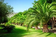 Vicolo di camminata con le palme in Sicilia Immagine Stock Libera da Diritti