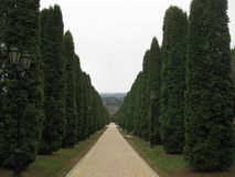 Vicolo di Cypress Il vicolo di Cypress va lontano Fotografie Stock