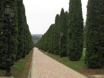 Vicolo di Cypress Il vicolo di Cypress va lontano Fotografie Stock Libere da Diritti