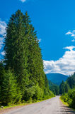 Vicolo di Cypress lungo la strada che conduce alle montagne Fotografie Stock