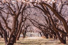 Vicolo di fioritura del giardino Fotografie Stock