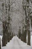 Vicolo di inverno Fotografia Stock
